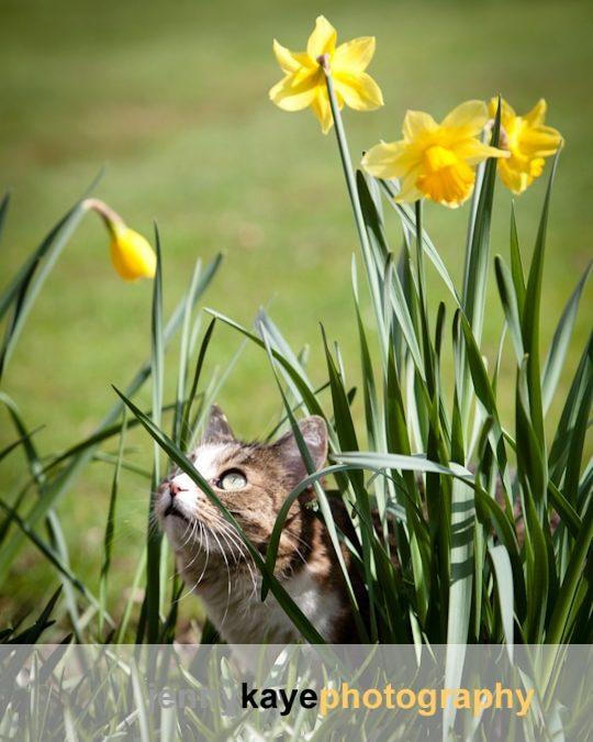 Spring photoshoots