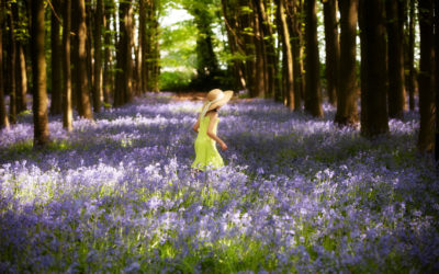 Photos in the bluebells