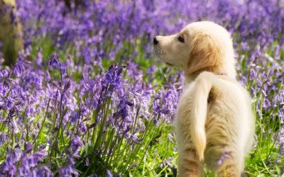 Dog walks near Beaconsfield, South Bucks